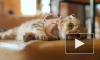 Кошки выражают эмоции с помощью мимики, но мы этого не видим