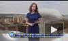 """Видео: любопытная чайка сорвала прямой эфир """"Прогноза погоды"""""""