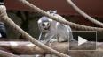 В Ленинградском зоопарке назвали имя и пол новорожденного ...