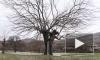 Видео: 150-летнее дерево в Черногории превратилось в фонтан