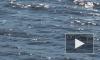 Нетрезвый рыбак утонул в Дудергофском канале, запутавшись в сетях