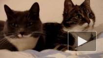 """День кошек в России: """"котики"""" и """"котэ"""" – тысячи лайков"""