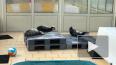 Центр спасения тюленей готовит 11 детенышей к жизни ...