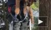 Видео: В Канаде спасатели спасли застрявшую на дереве пуму