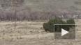 В Аризоне очевидцы сняли на видео снежного человека