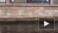 Юрий Дудь заметил бобра, рассекающего канал Грибоедова