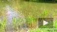 В Петербурге отчаянная мать спасла из пруда тонувшего ...