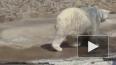 23 февраля в петербургском зоопарке отметят День белого ...