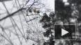 Кабинка колеса обозрения в Зеленогорске опасно раскачала...