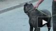 В Петербурге судебные приставы забрали у женщины собаку