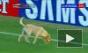 Выбежавшая на поле собака  едва не сорвала матч в Южной Америке