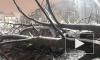 Во Фрунзенском районе дерево упало на припаркованную машину