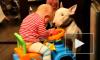 В Кемеровской области собаки загрызли годовалого малыша, его бабушка повесилась