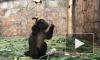 У капуцинов Ленинградского зоопарка родился первый детеныш