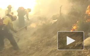 В 2018 году в России сгорело 5,56 миллиона гектаров леса