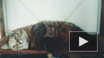 Петербуржцы предпочитают заводить беспородных кошек