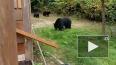Видео: канадец вежливо попросил семью медведей покинуть ...