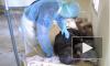 Последние новости о вирусе Эбола на 28 сентября — ситуация остается критической
