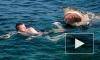 В ЮАР огромная акула напала на юношу и откусила ему ногу