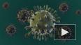 Назван способ победить коронавирус до появления вакцины