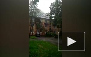 Шторм валит деревья и затапливает дороги в Петербурге