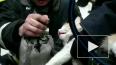 Волгоградские спасатели откачали котейку, который ...