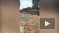 Видео: на Суздальских озерах утонул 30-летний петербурже...