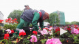 Видео: въездной знак Выборга украсили 1600 цветов герани