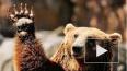 Медведи-людоеды осаждают хабаровское село: люди боятся ...