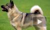 Женщина получила условный срок за то, что стала употреблять амфетамин после смерти любимой собаки