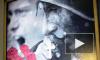 Новый скандал с плакатом к снятию блокады: постановочный воин-освободитель целует крест