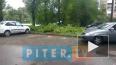 Видео: на Кингисеппском шоссе деревья обрушились на неск...
