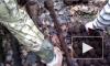 У спасателей из Ломоносова нашли целый арсенал ржавого оружия