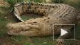 Более 15 тысяч крокодилов сбежали с фермы в Африке