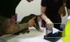 Видео: в Каменке спасатели вытащили котенка из вентиляции