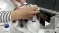 В Колпино живодер изрезал кошку