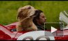 """Говорящий пес и гонки: вышел трейлер фильма """"Невероятный мир глазами Энцо"""""""