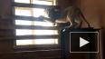 Полицейские сняли на видео львят, которых нашли в ...