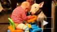 В Кемеровской области собаки загрызли годовалого малыша,...