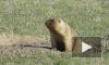 В Ленинградском зоопарке не будут будить грызунов на День сурка