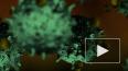 В России выявили 71 новый случай заражения коронавирусом