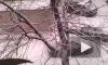 Снегопад в Петербурге стал лучшей первоапрельской шуткой