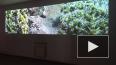 В Петербурге завершилась выставка исландского видеоарта ...
