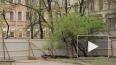 Единоросс Макаров лег под экскаватор, спасая зелень