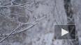 Гидрометцентр предупредил москвичей о метели и снегопаде