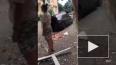 Видео из Сочи: В пятиэтажке в Адлеровском районе произош...