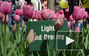Елагин остров захватили тюльпаны
