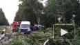 Смертельное ДТП на Дороге жизни: четверо петербуржцев ...