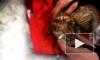 Трогательное видео облетело соцсети: Спасатели и ветеринары спасли кота после пожара