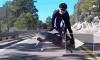 """""""Осторожно, олень!"""": велосипедист стал жертвой на дороге"""